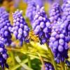 花に寄ってくるミツバチ・・・的な