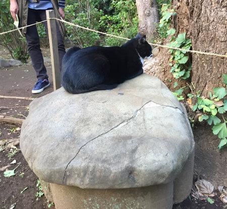 江ノ島神社猫