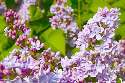 garden-2944138_640