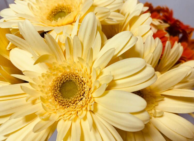 生氣を養う、氣を貯めるために部屋に花を飾るという話