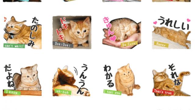 【LINEスタンプ】「可愛い茶トラ猫ミューの写真スタンプ」リリース