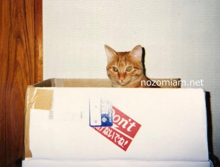 【LINEスタンプ】「可愛い茶トラ猫ミューの写真スタンプ」