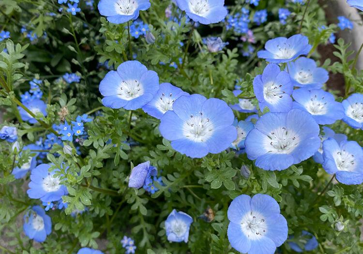 nozomiam2020年5月花画像